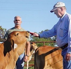 Temperament Plays Key Role in Cattle Health