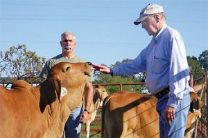 Even tempered cattle can be more productive and respond better to vaccines, according to research by ARS animal scientist Jeff Carroll (left) and animal physiologist Ron Randel from Texas AgriLife Research and Extension Center.