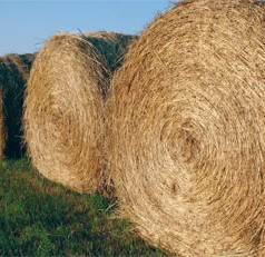 How hay is stored can affect farmer costs, cattle nutrition