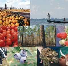 UF study: Florida's agricultural and natural resources industries remain strong since recession