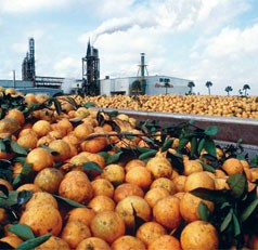 Generous donation allows UF/IFAS much-needed citrus field research acreage