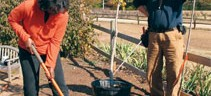 Fall is the time to plant and transplant trees and shrubs