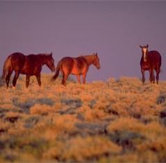 Pastured 'wild' horses to cost U.S. $1 billion by 2030, researchers warn in report