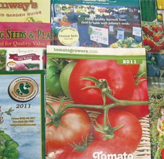 Jumpstart your spring garden by starting vegetable seeds indoors