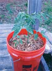 Container gardens need good soil and nutrients for success