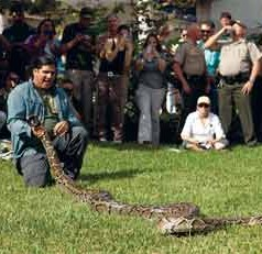 New study finds Burmese pythons have homing sense