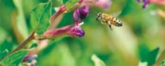 Survey Reports Fewer Winter Honey Bee Losses