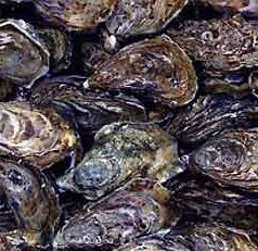 Scientists Find Mosquito Control Pesticide Low Risk to Juvenile Oysters, Hard Clams