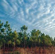 UF/IFAS strategies give forest owners, managers disaster-coping methods