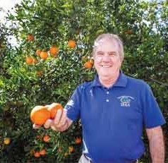 Retracing citrus' earliest roots to find clues for healthier future