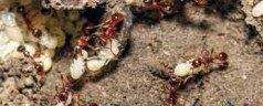 Are ants the answer to carbon dioxide sequestration?