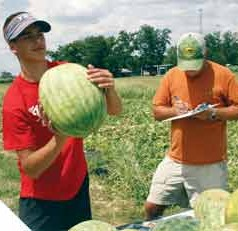 Georgia's watermelon crop producing sweet results.