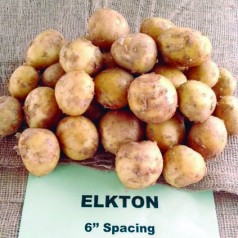 No browning, maybe less oil with Florida's Elkton potato