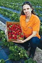 UF/IFAS study: Strawberry monitoring system could add $1.7 million over 10 years to some farms