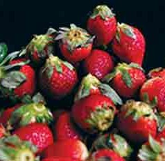 UF, N.C. A&T forge ahead with organic strawberry research