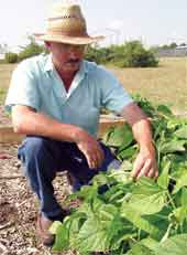 UGA expert offers advice for new small-scale farmers
