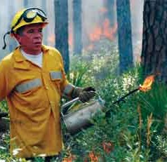 UF/IFAS study: Forest managers hindered in efforts to use prescribed burns to control costly wildfires