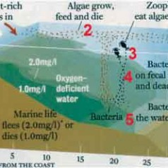 Average 'dead zone' predicted for Gulf of Mexico in 2015