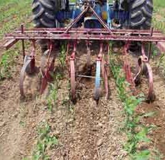 Tillage timing influences nitrogen availability, loss on organic farms