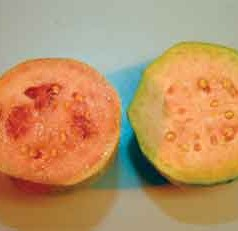 UF/IFAS study: Although it's a niche market, guava can be profitable
