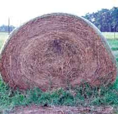 Hay farmers attest to benefits of UGA forage testing lab