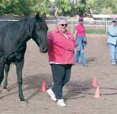 Equine-assisted psychotherapy researcher working with military veterans