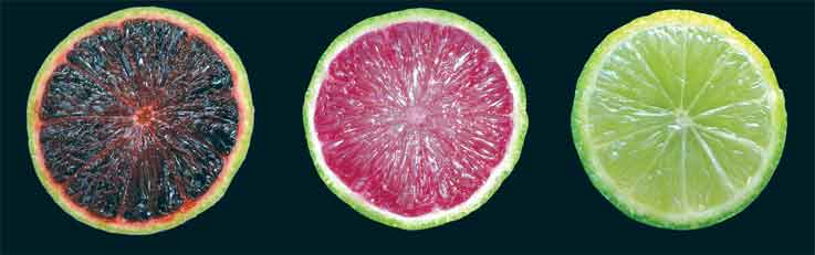 Purple limes and blood oranges could be next for Florida citrus ...