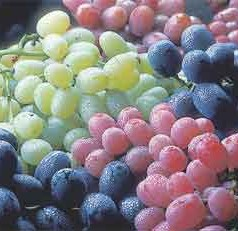 Lowering the Risk of Infection with Grapes