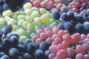 Consuming grapes may help reduce infection risk in obese people, ARS research suggests.