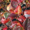 Add attractive plants to your landscape that provide nutritious fruit, too