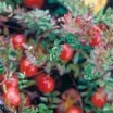 Cranberry Juice Can Boost Heart Health