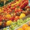 Balance your tomato garden's soil pH and fertilization for a bountiful homegrown harvest