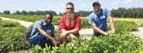 CAES plant pathology doctoral student working to maximize the productivity of Haitian farmers