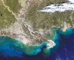 Average Sized 'Dead Zone' Predicted for Gulf of Mexico