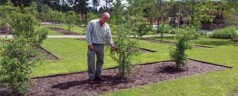 Gregory Kramer Director Of Horticulture Bok Tower Gardens Lake Wales, Florida The Native Beauty Of Florida