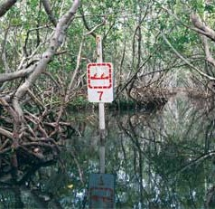 UF/IFAS researchers to present findings on critical ecosystem habitats at international conference