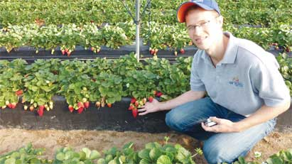 UF/IFAS researchers are looking for ways to thwart angular leaf spot, a pathogen that can destroy up to 10 percent of Florida's $300 million-a-year strawberry crop in years with multiple freezes. In newly published research, Vance Whitaker, a UF/IFAS associate professor of horticultural sciences, and a team of researchers found genetic markers they believe can lead them to develop strawberry cultivars that are more resistant to angular leaf spot.