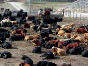 NORTH AMERICA - The extreme volatility in North American cattle markets over the past 12 to 18 months has surprised many market analysts, but most believe that the extreme swings are over, and there will continue to be steady, downward movement on cattle prices over the next couple of years, writes Angela Lovell.