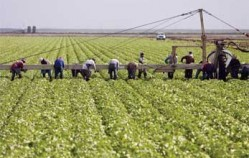 UF/IFAS report: Florida agriculture, natural resources employment up 29 percent in 13 years
