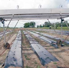 Rain simulation project aimed at improving Georgia vegetable production
