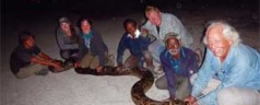 Irula tribesmen and detector dogs help UF/IFAS and FWC remove pythons in Florida