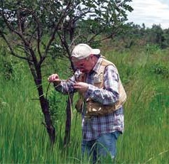 UF/IFAS researchers find potential bugs to eat invasive cogongrass
