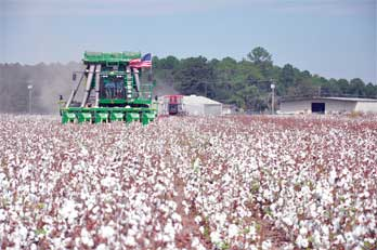 Georgia planted 1.18 million acres of cotton in 2016, compared to 1.17 million acres in 2015, according to the UGA Farm Gate Value Report.