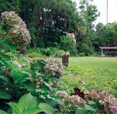UF workshop to help homeowners navigate HOA issues for landscaping