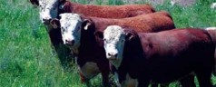 Analyzing Disease Mutations Using Online Cattle Genomes