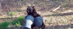 UF researchers offer tips on keeping black bears away