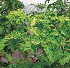 Give plants sun, space and air to prevent garden diseases