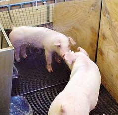 Pig Pens: A Look at Mirrors and Mat