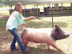 Back in 2015, Coourtney Conine of Camilla, Georgia, was chosen for Showpig.com's All-Star Team. She was one of 18 high school students selected nationally and the only member of the all-star team from Georgia. The honor is bestowed on students within the swine industry who have a passion for agriculture, leadership and service learning. Through years working in Georgia 4-H and FFA, she was dedicated to feeding and caring for her animals and she learned about nutrition in animals and financial responsibility.
