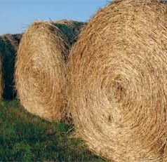 Annual Southeastern Hay Contest deadline set for September 21